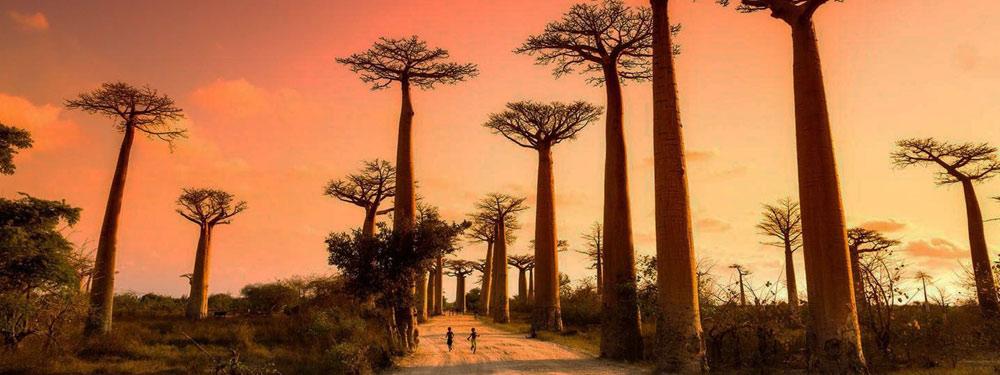 Baobab Capital (Pty) Ltd